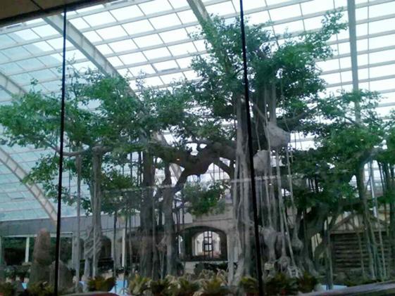 杭州假樹.jpg